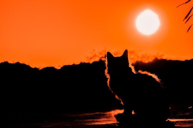 Кошка на закате