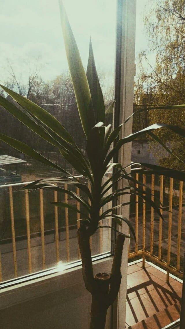 молодой росток пальмы на старом стволе