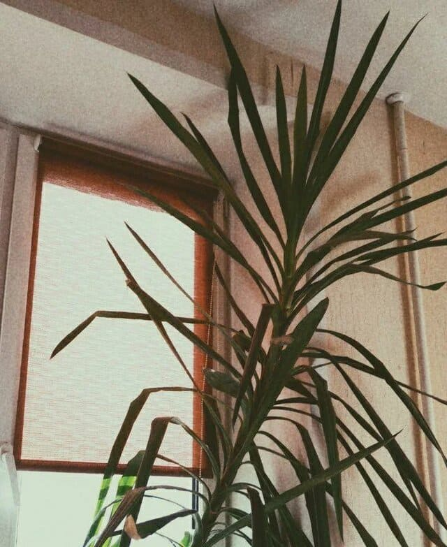 пальма возле окна