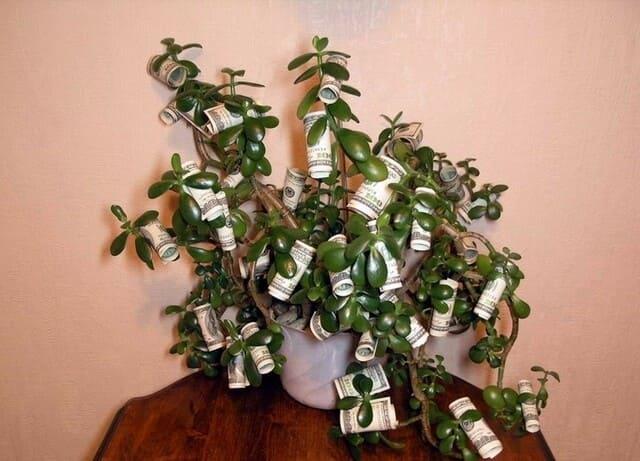 Толстянка уркажена деньгами