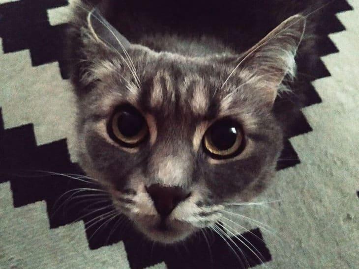 кошка смотрит на хозяина