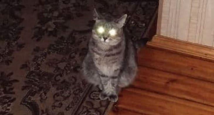 В темноте зрачки у кошек расширяются, что породило разные суеверия