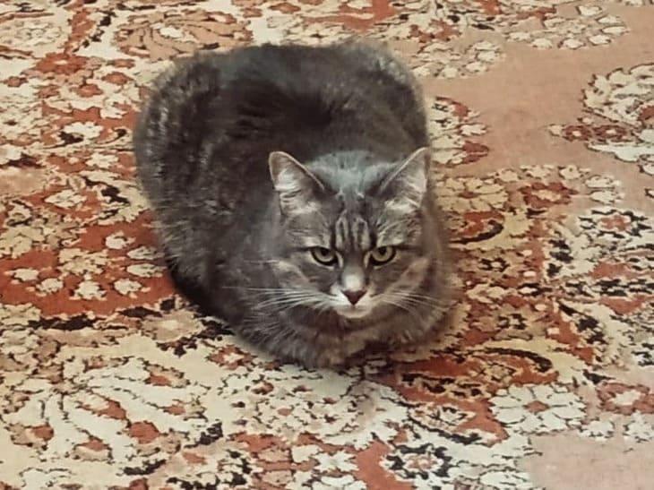 Почему нельзя смотреть кошке в глаза: ТОП-5 примет и научное объяснение
