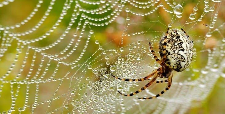 приметы о пауках в доме