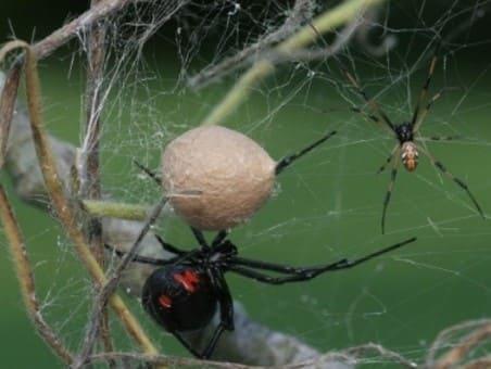 еще одна причина не убивать пауков