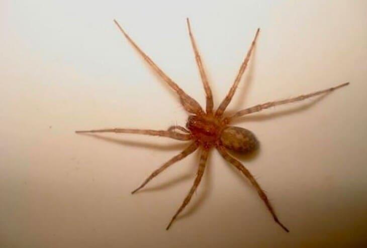 пауки довольно пугливы